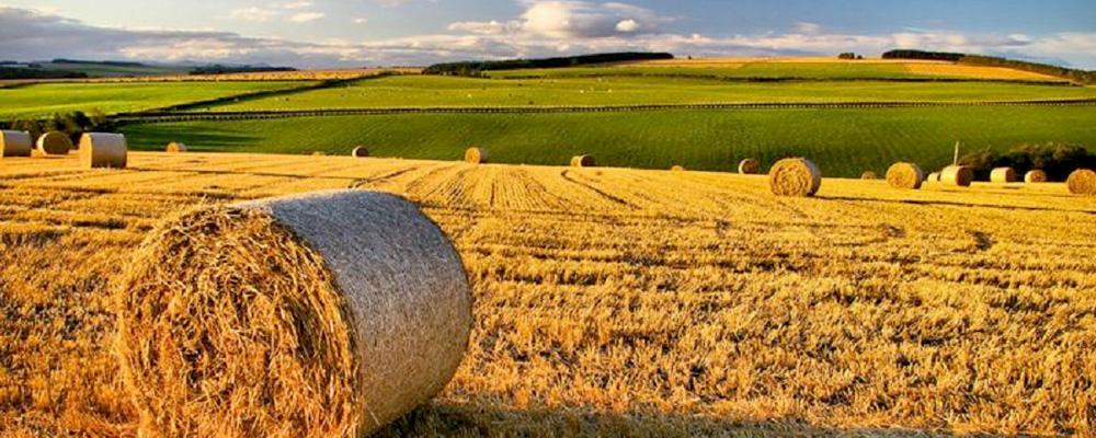 programma-elettorale-agricoltura-marconia-pisticci-movimento-5-stelle-basilicata